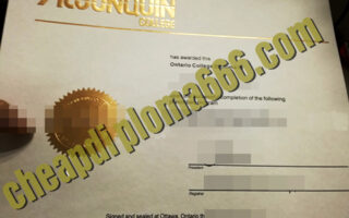 buy Algonquin College degree certificate